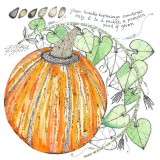 Pumpkin, a card by Fiona Willis