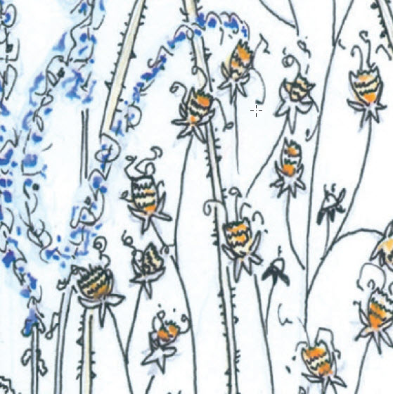 Seed heads. Copyright Fiona Willis Artwork