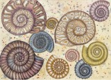 Fossils, a print by Fiona Willis