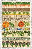 Vegetable Patch, a print by Fiona Willis