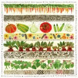 Veg Patch, a card by Fiona Willis