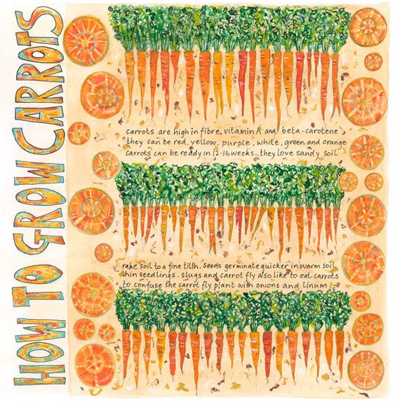 How to Grow Carrots, a card by Fiona Willis