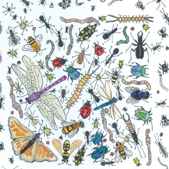 A Year in the Garden - Insects. A card (c) Fiona Willis